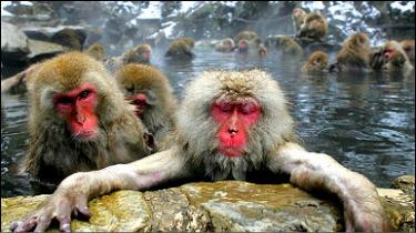 100924150452_macaque_386x217_nocred